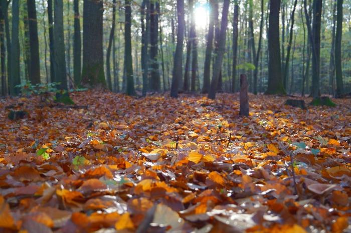 Writing Seasonal Blog Posts