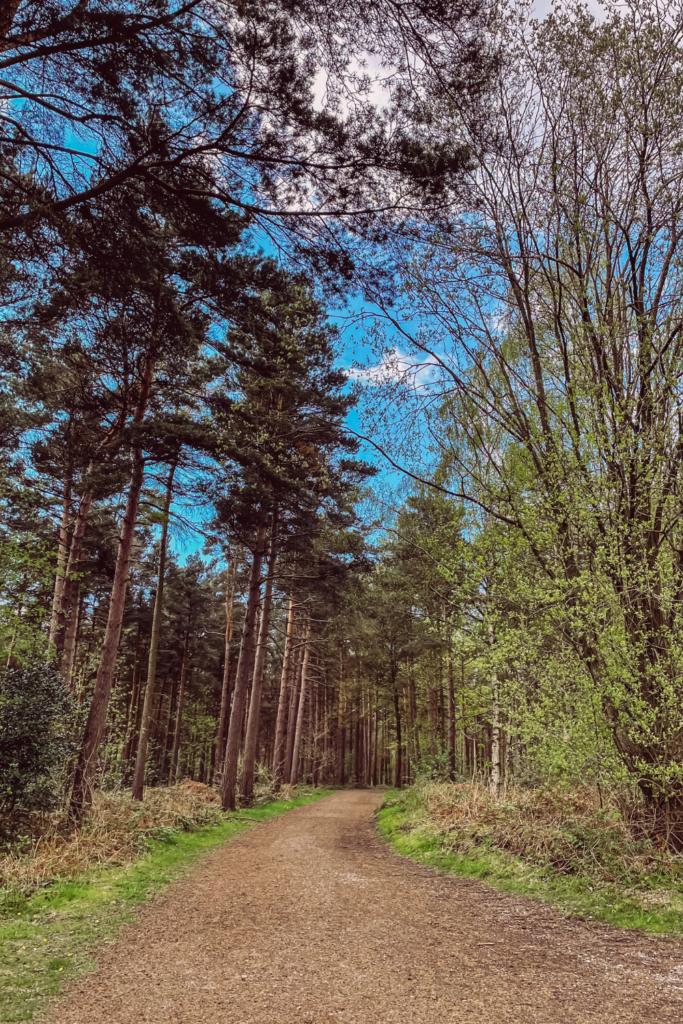 A Yorkshire Walk